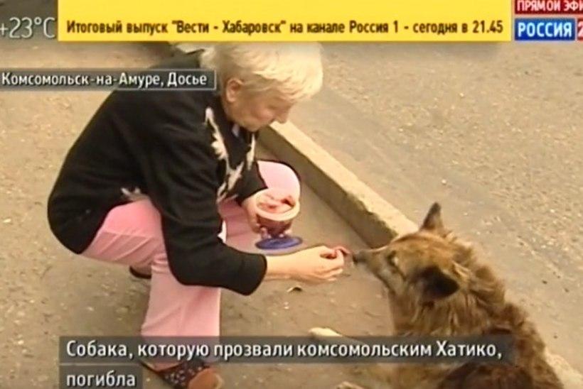 Koer ootas 12 aastat tänaval, kus peremees surma sai