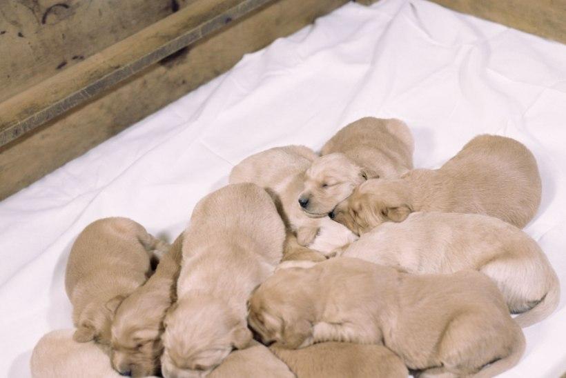 Bensiinijaama tagant ostetud koera elu jääb üürikeseks