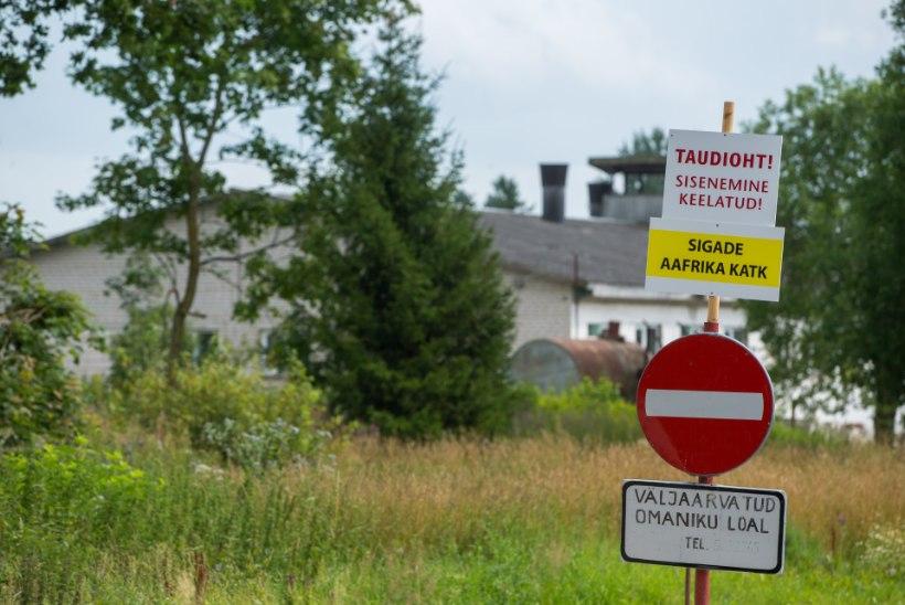 Saaremaa katkusead tuuakse mandrile