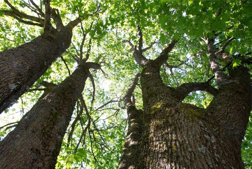 MITU TUNDI EKSLEMIST: politseisõiduki sireen aitas eksinud seenelised metsast välja