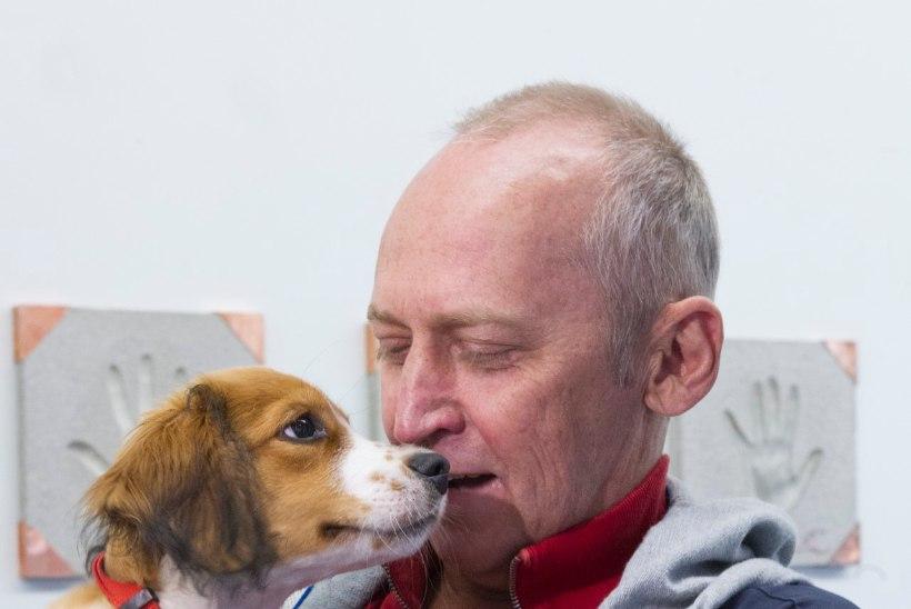 Teadlased tõestasid / Kui palju koerad meid tegelikult mõistavad?