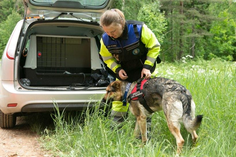 Politsei otsis Võrumaal eksinud seenelist kopteri ja koertega