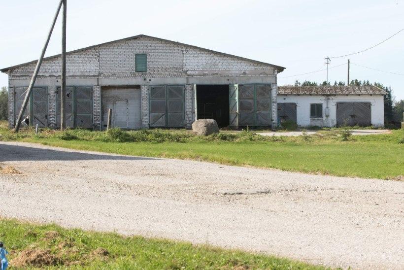 Piimakriis virutas lehmalauda uksed kinni. Pool küla jäi tööta