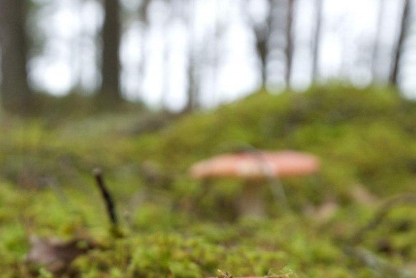 Sõida seenele