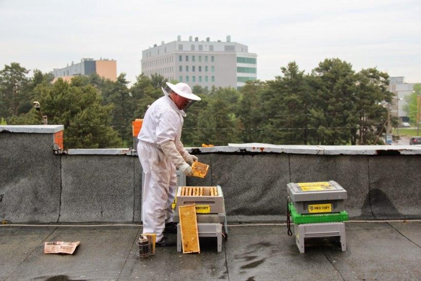 Tehnikaülikool peab Mustamäel mesilasi
