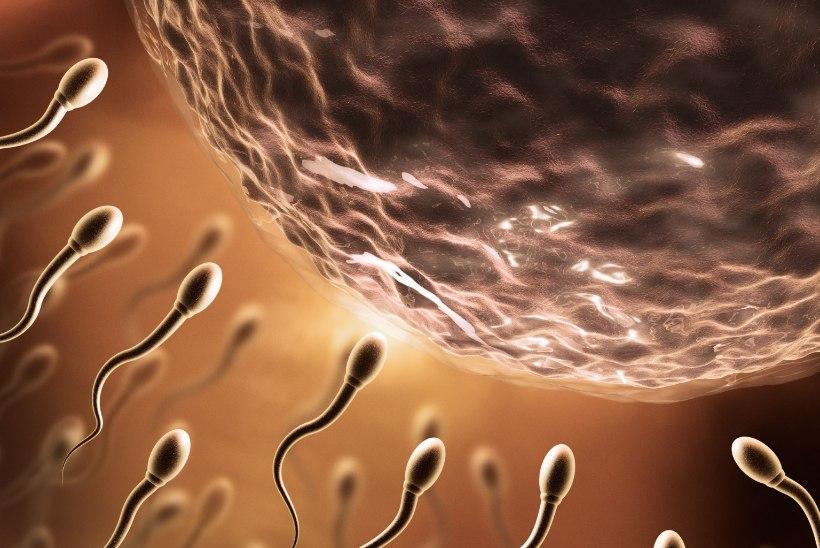 Spermaga on naised silunud kortse ja spioonid kirjutanud salasõnumeid