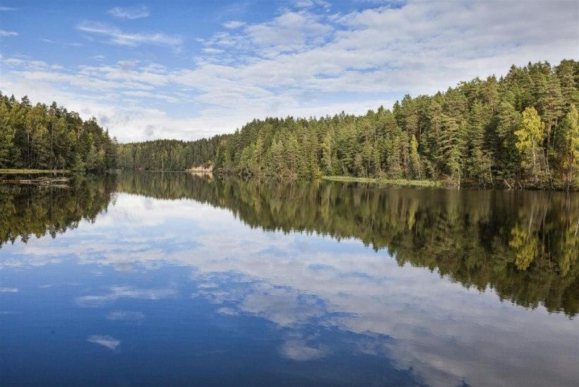 Madis Messimas: miks me sekkume looduslike veekogude ellu?