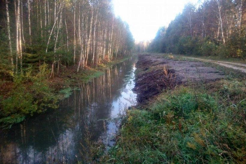 Jägala jõel hävivad forelli kudeplatsid