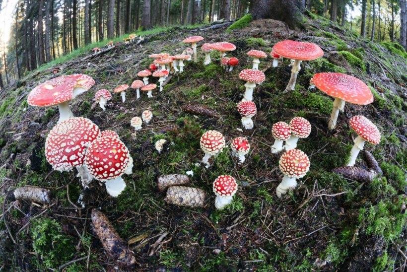 Kas maailma valitsevad seened?
