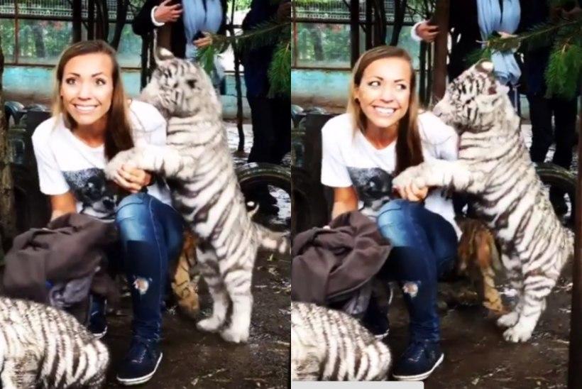 VIDEO / Kertu Jukkumit ründas tiigrikutsikas!