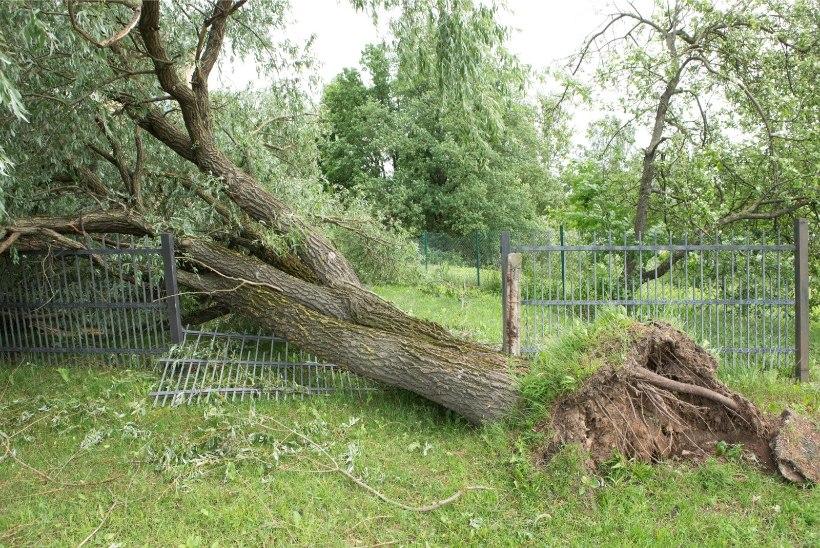 Krimikokkuvõte reedel: ETTEVAATUST LIIKLUSES! Tormituul rapib puid ja elektriliine!
