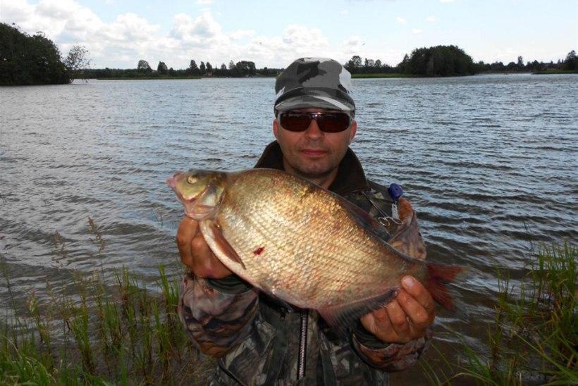 Sügis Narva jõel II:  latikas feedriga