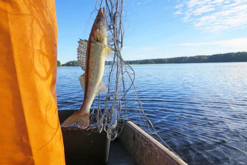 Kolm juulipäeva Kaiu-Jõemõisa järvedel