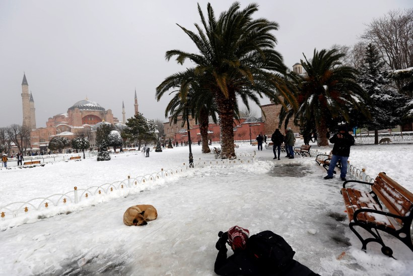 Istanbuli kaubamaja lubas hulkuvad koerad külmalaine eest ööseks sooja