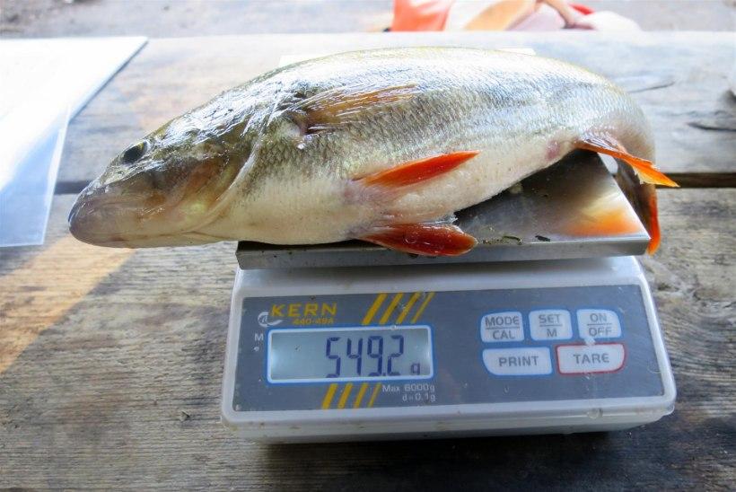 Jalgrattaga kalale? Miks ka mitte!