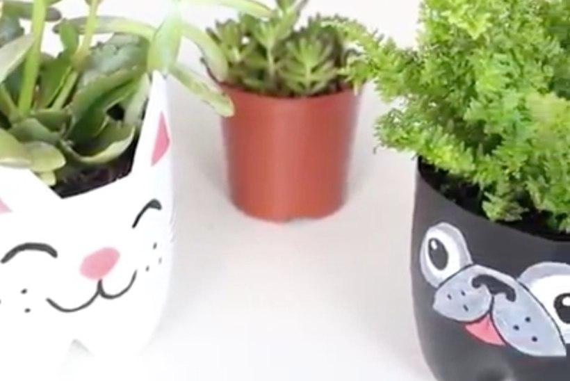 VIDEO! Meisterda plastpudelist armsad lillepotid