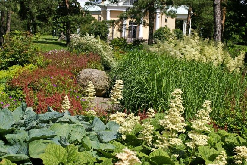 Varjulised aiaosad – millised taimed seal kasvada tahavad?