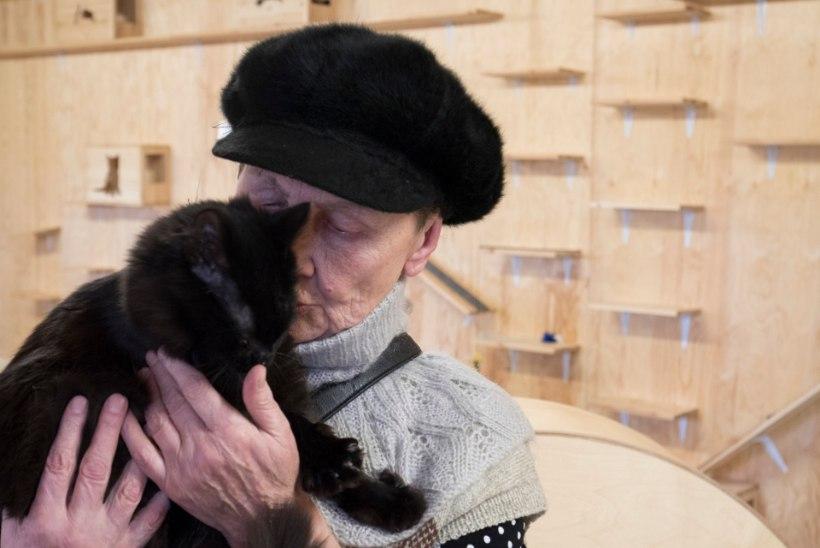 SÜDAMLIK VIDEO | Vanaproua otsis varjupaigast kassi, kes tema pisikesse tuppa rõõmu tooks