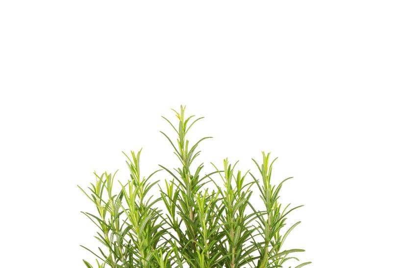 11 taime, mis aitavad stressi vähendada