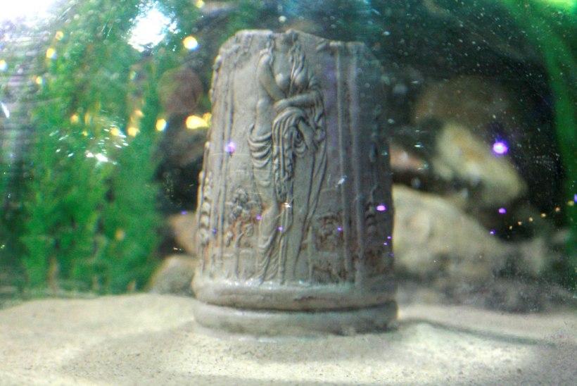 Keskajal hukkunud laeva last kuulus arvatavasti arstile või apteekrile