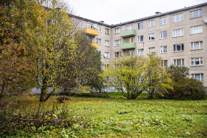 Raieluba polegi vaja: Mustamäel saeti elumaja hoovis maha kolm õunapuud