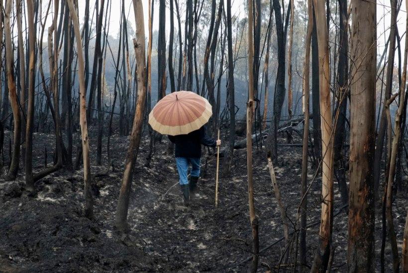 Metsapõlengud Portugalis on nõudnud juba 36 inimese elu, kuulutati välja kolm leinapäeva