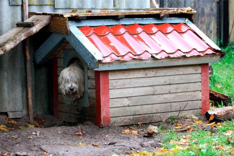 Loomakaitse liidu soovitus koeraomanikele: vastu talve kontrollige üle ka koerakuudid!