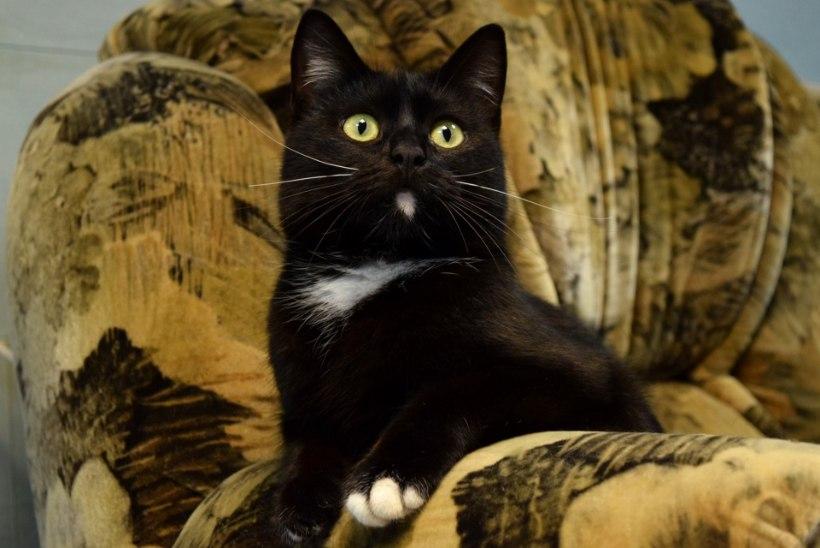 Oktoober on varjupaikades musta kassi kuu