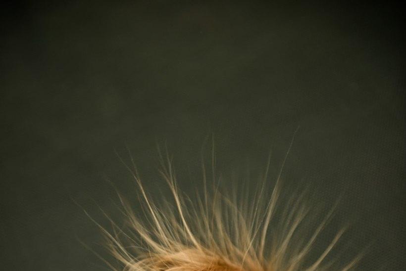 Kuidas juustest elektrit välja saada?