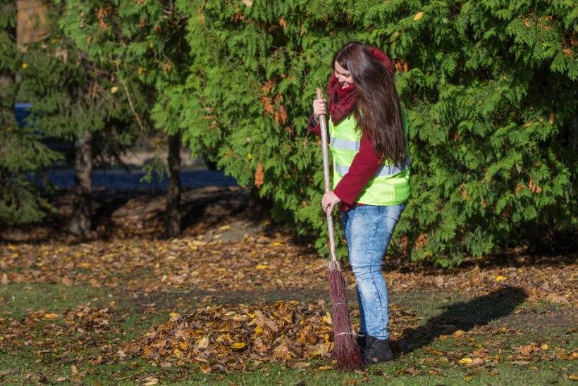 ÕL VIDEO | NAISED VERSUS SÜGIS: kas langenud lehtede vastu tasub lahingusse minna lehepuhuri, reha või luuaga?