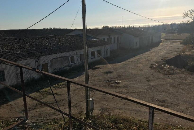 FOTOD | Läänemaal avastati ebaseaduslik tapamaja
