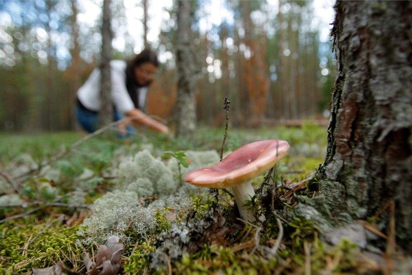 """""""Orissaare seenelised"""" ehk Vaata, millised näevad välja meie korilastest kuulsused!"""