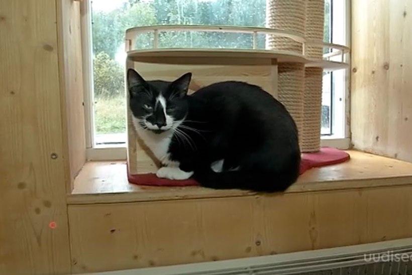 TV3 VIDEO   Musta kassi kuu! Oktoobris on võimalik adopteerida must kass loovutustasuta