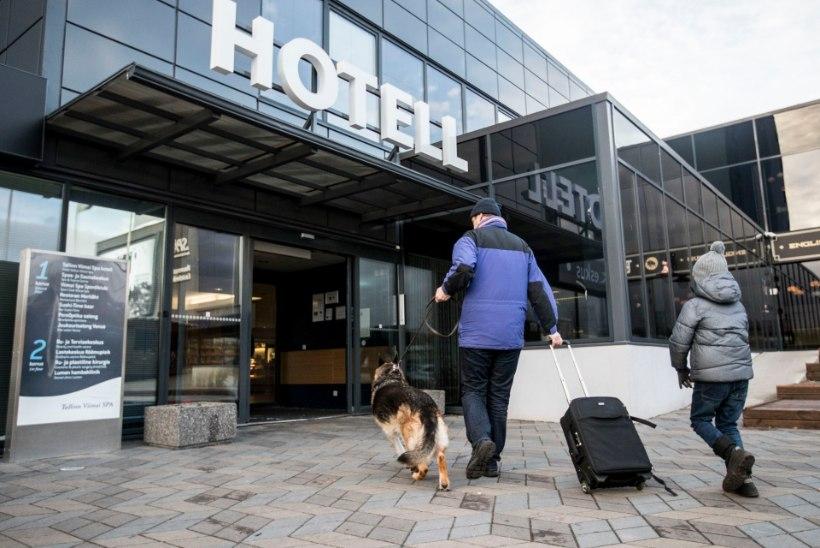 Veemõnula, kino ja hotell: kuhu võib koera kaasa võtta?