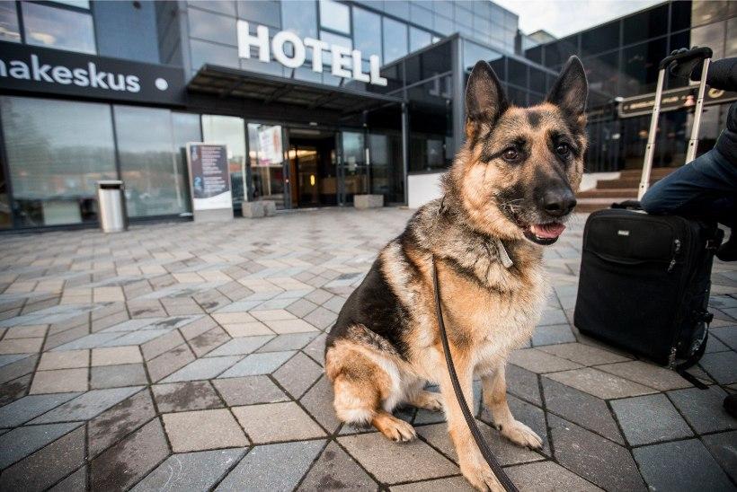 Tallinna ülikool pakub esimest korda koerte käitumise kursust