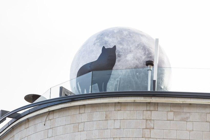 GALERII | PÖFF SAI AVALÖÖGI: kaubanduskeskuse katusele paigaldati hiiglaslik ulguvat hunti kujutav kuumaõhupall