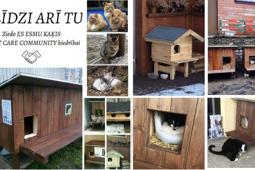 Lätis meisterdasid heasoovijad kodututele kassidele enam kui sada kaunist talvemajakest