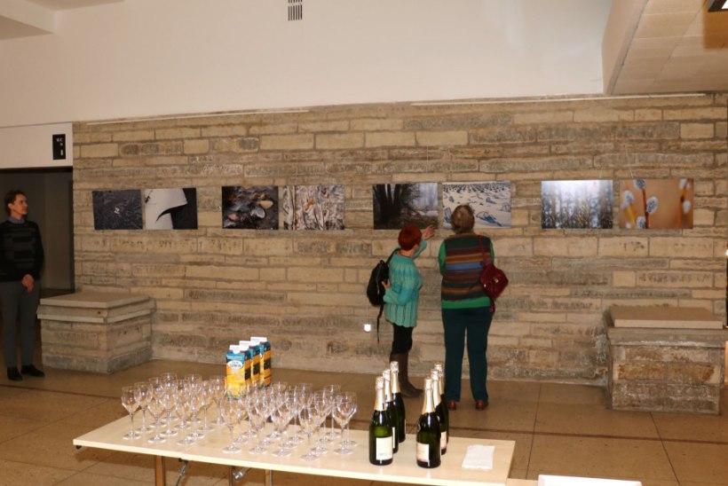 PILDID | Ly Menovi fotonäitus Paide kultuurikeskuses mälestab varalahkunud andekat fotograafi