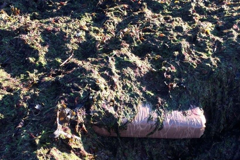 Lohusalu rannast leitud kokaiin oli kõrge puhtusastmega