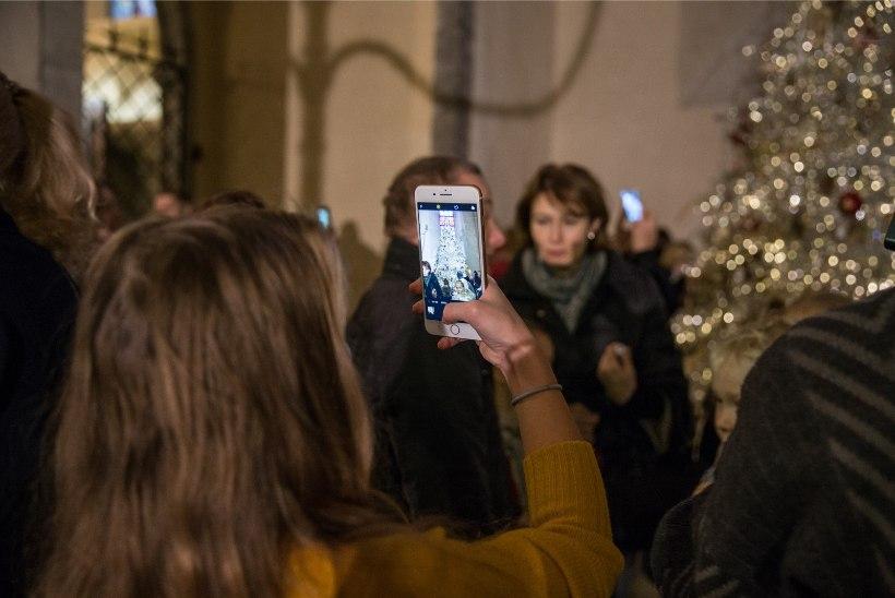 GALERII | Niguliste muuseumis pandi püsti jõulupuu