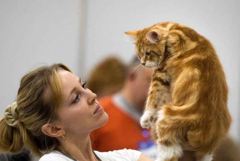 KARVASED BRIGADIRID: Venemaal palgatakse kasse uuselamuid hubastama