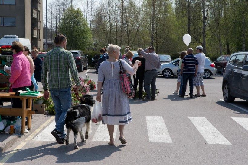 GALERII   Vaata, kuhu on Evelin Ilves koer Schubyga oodatud!
