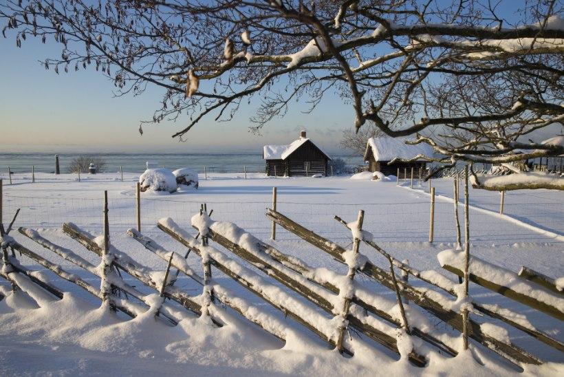 ASJATUNDJAD VASTAVAD: Kas jõulud tulevad valged?