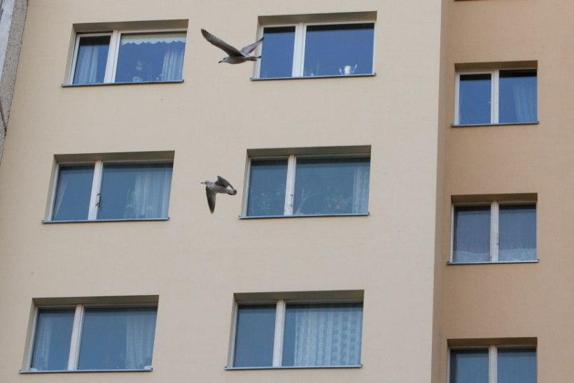 "NAABER: ""Südaööl algas korteris kõva lärm ning sõimlemine!"""