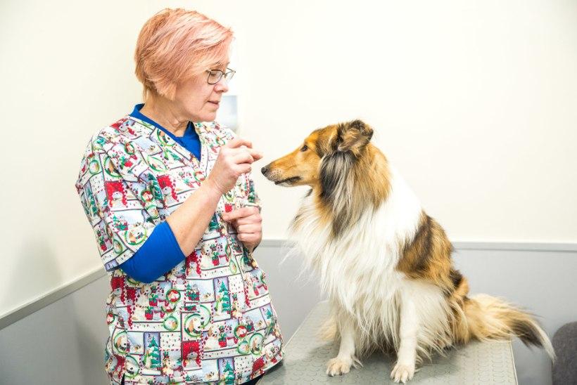 Eesti üks paremaid sportlasi – loomaarst, kes jahib loomakujusid