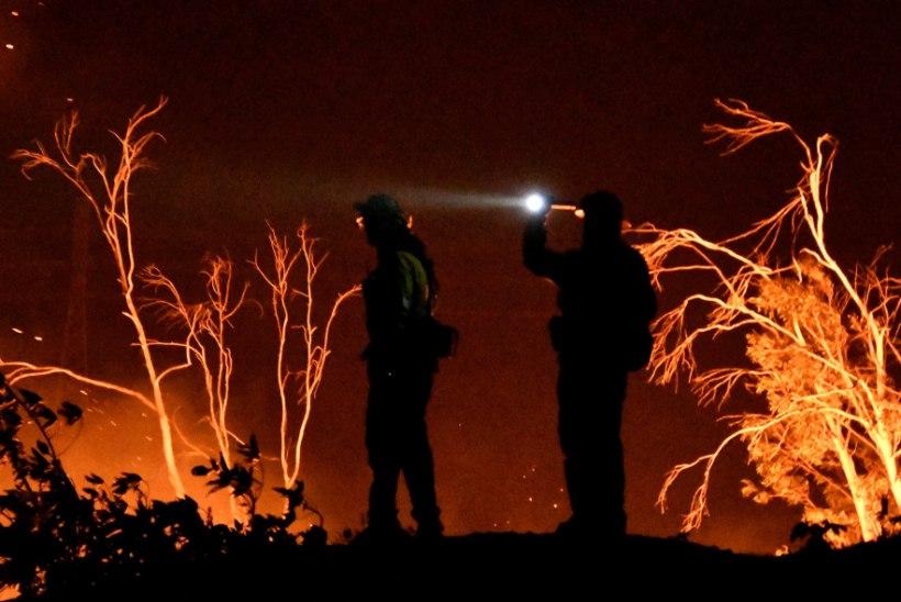 FOTOD | California põlengud on võtmas osariigi ajaloo suurimaid mõõtmeid