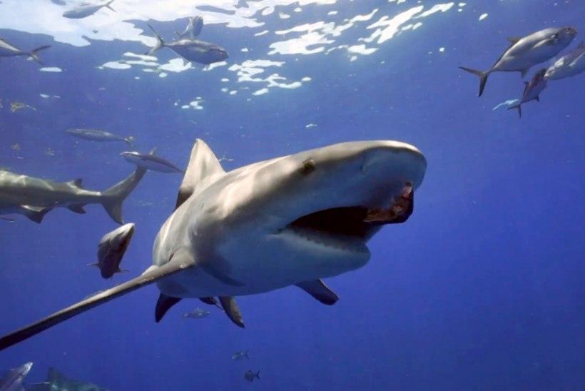 Tiigerhai tappis puhkusel olnud turisti