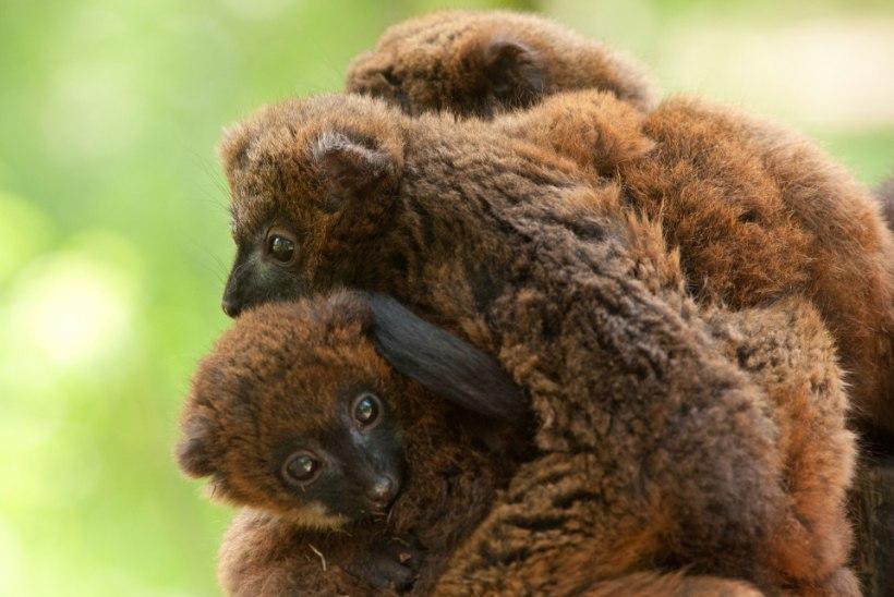 Tõestus loomariigist: kallistamine on tervislik!