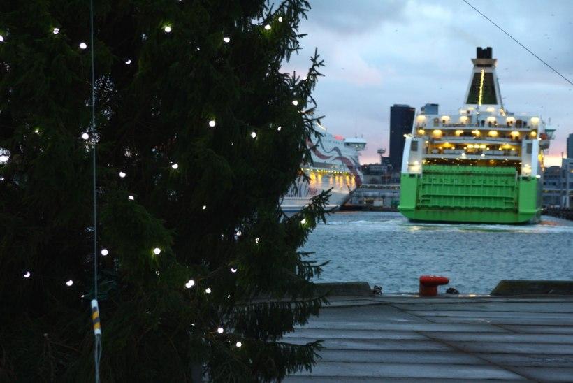 GALERII: Eesti kõige tormikindlam jõulukuusk