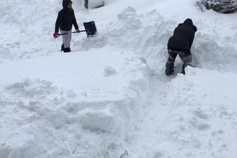 FOTOD JA VIDEOD | Pennsylvanias sadas jõulude ajal maha erakordselt paks lumi